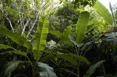 SOB-Jungle2.jpg (1600×1064)