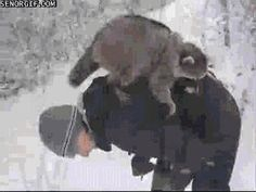 "(Arbitrarily, Number Four:)THIS | ""The 18 Most Important Raccoon-Related GIFs On The Internet"""