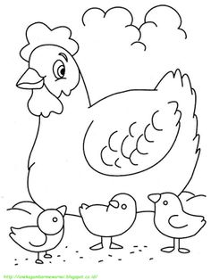80 Gambar Ayam Yang Bisa Diwarnai