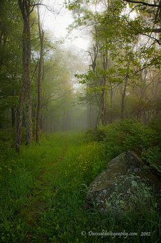 Early morning light filters through the fog to illuminate a path in Shenandoah National Park. By Dwood Photography Morning Wood, Morning Light, Shenandoah National Park, National Parks Usa, All Nature, Amazing Nature, Vacation Spots, State Parks, Countryside