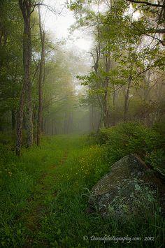 Shenandoah National Park.USA