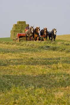 #Amish farming in Lancaster County, PA - the home of amishgazebos.com!