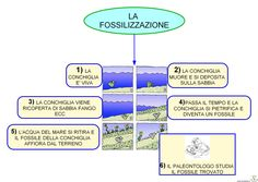 FOSSILIZZAZIONE School Resources, Problem Solving, Geography, Pixel Art, Bullying, 3 D, History, Learning, Books
