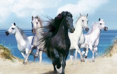 HD Horse Wallpapers