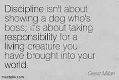 cesar millan quotes - Google Search