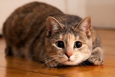 Experts weigh in on why cats sometimes seem to be sensing the paranormal.
