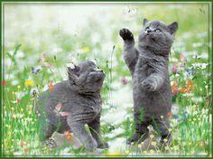 gatinhos brincando ☺