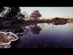 WETLANDS Animals of the wetland - YouTube