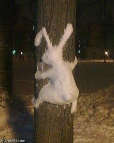 haha...Snow bunny hits pole!