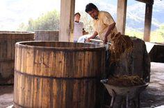 El maestro Daniel explicando el proceso de fermentación, posterior a la molienda.