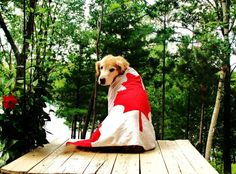 Oh Canada! Hope everyone is enjoying the long weekend and heat! I Am Canadian, Happy Canada Day, Canada Eh, Animal Faces, Pet Memorials, Animals Of The World, Vancouver Island, Dog Photos, Long Weekend