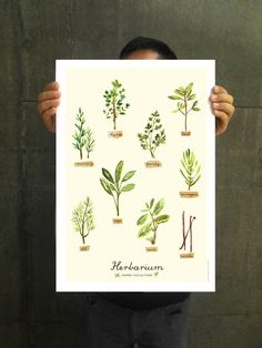 Herbs Illustration Watercolor Herbs Poster Digital by colorZen