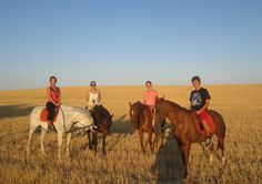 Horse riding in the fields