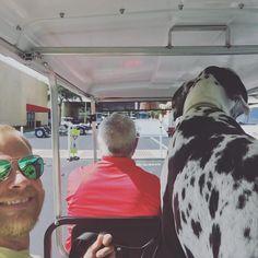 Rolling #golfcart style and RV shopping with my mom and dad! #greatdane #adorable #heartofadane #greatdanesunleashed #repostmydane #dane #gentlegiant #bigdog #cute #doglover #danesofinstagram #greatdanes #gentlegiant #doggies #doggieadventures by moose_the_great_dane