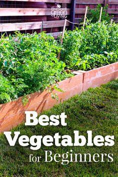 The Best Vegetables For Beginners