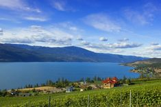 Welcome to Gray Monk - the Okanagan's oldest family owned and operated winery, located in Lake Country, BC. Grapevine Restaurants, Local Eatery, Vancouver British Columbia, Pinot Gris, Stunning View, Grape Vines, Wineries, Grey, Places