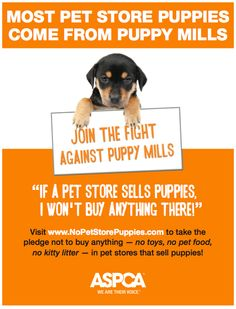 as I was watching the people staring at puppies in the window downtown... PLEASE STOP!! Know what you are supporting!! Puppy mills not only are horrible torture to the dogs that are stuck there, but they are killing shelter dogs by not giving them the chance at adoption.