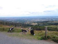 Ticknock forest dog walk near Dublin Dog Paws, Dog Walking, Dublin, Walks, Wood, Animals, Animales, Woodwind Instrument, Animaux