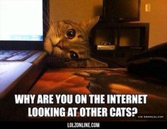 Jealous Overly-Attached Cat #lol #haha #funny