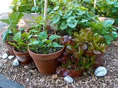 Three Rules Small Space Garders Must Follor...Clay Pot Vegetable Container Garden