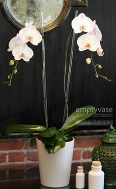 Orchids from The Empty Vase