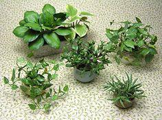 International Guild of Miniature Artisans | Plants by Carolyn Mohler Kraft, IGMA Fellow