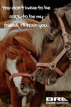 You don't have to be crazy to be my friend. I'll train you. #BRLEquine