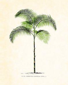 Antique French Palm Tree Plate 35  Botanical 1878 8 x 10 Art Print Wall Decor via Etsy