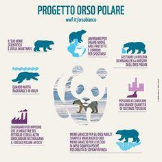L'Artico si sta letteralmente fondendo sotto le zampe degli orsi polari... Scopri di più http://www.wwf.it/orsobianco/