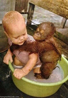 Baby human and baby orangutan - We have got to save these animals. DO NOT USE PRODUCTS WITH PALM OIL! This is whats killing these innocent animals. We will LOSE them if humans continue to buy palm oil products! So Cute Baby, Cute Babies, Chubby Babies, Cute Creatures, Beautiful Creatures, Animals Beautiful, Cute Baby Animals, Animals And Pets, Funny Animals