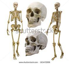 Esqueleto - Imagens gratis no Pixabay
