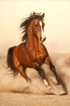 Or I dream il fancies me, though I'm jumping on a quick horse . Discussion on LiveInternet - Russian Service Online diary - Marie Grzymlas - Pferd Pretty Horses, Horse Love, Beautiful Horses, Animals Beautiful, Horse Pencil Drawing, Horse Drawings, Animal Drawings, Drawing Art, Pencil Drawings