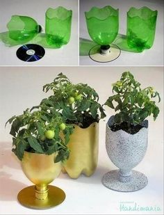 potted plant holders made from cds and empty soda bottles