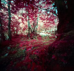 woods in red [my pinhole cameras series #9]
