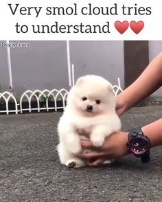 Watch funny and cute dogs and puppies as they are the most lovable pets in the world. Cute Little Animals, Cute Funny Animals, Funny Dogs, Cute Cats, Cute Dogs And Cats, Little Dogs, Fluffy Puppies, Cute Dogs And Puppies, Dalmatian Puppies