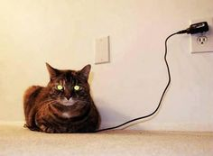 ladydarkwolf:  bunnyfood:  Charging the cat  The eyes are green. It's charged. Please unplug your cat.