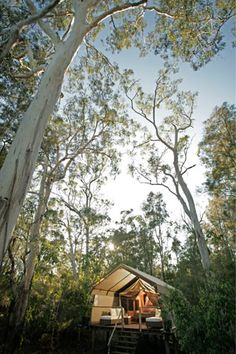 Paperbark camp in Jervis Bay. Glamping (luxury camping) in the rainforest in a tent with all the luxuries. Fine dining restaurant in beautifully designed building. This earned me brownie points with the b/f, big time!!!