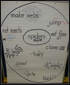 Today In First Grade: Spiders, Spider, Spiders!