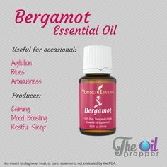 Young Living Bergamot Essential Oil - The Oil Dropper Bergamot Essential Oil Uses, Essential Oils For Asthma, Essential Oils For Skin, Young Living Essential Oils, Essential Oil Blends, Young Living Bergamot, Healing Oils, Angst, Young Living Oils