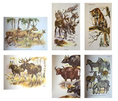 Mammals of the World by Hans Hvass with Illustrations by Wilhelm Eigener