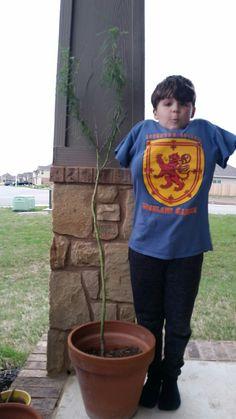 Matthew And his Retama tree, a gift from Kay. 4/9/18 .