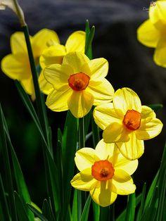 Lindas flores amarillas