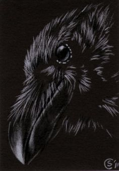 Your place to buy and sell all things handmade Bird Drawings, Pencil Drawings, Crow Meaning, Raven Mask, Raven Bird, Crows Ravens, Big Bird, Halloween Coloring, Limited Edition Prints
