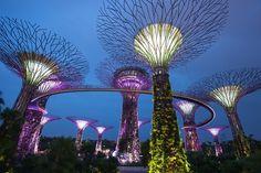 Ce curiozități am descoperit în Singapore