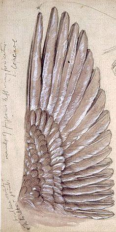 Nature&Culture — Edward Burne-Jones - Drawing of wings Angel Wings Art, Bird Wings, Angel Art, Edward Burne Jones, Angel Drawing, Pre Raphaelite, Angels And Demons, Art Design, Animal Drawings