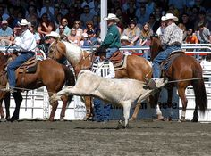 Calgary Stampede perpetuates tradition of animal abuse - Greener Ideal