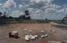 William Eggleston, Black Bayou Plantation, near Glendora, Mississippi, c. 1969-70