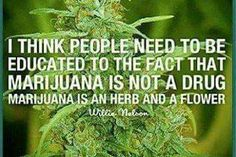 True, please legalize herbal remedies cause CHEMO SUCKS, GIVE ME A CHOICE,PLEASE!!!