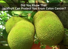 #DidYouKnow That #Jackfruit Can Protect You From Colon Cancer?