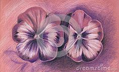 Pansies Stock Photos – 1,899 Pansies Stock Images, Stock Photography & Pictures - Dreamstime - Page 2